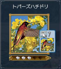 トパーズハチドリ