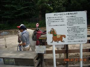 ポニーの乗馬体験(お子様限定)