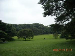 明治神宮の芝生2