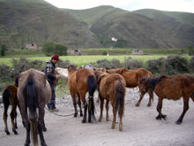 牛も豚も馬もロバもヤクも山羊も、動物率が上がってきます