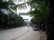 街路樹が椰子の木だーよー、まさに南国ですよねー