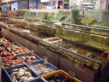 さかな魚肴ー♪
