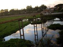 川面に植物が茂ってて雰囲気あるよー 小舟がまたひと味+
