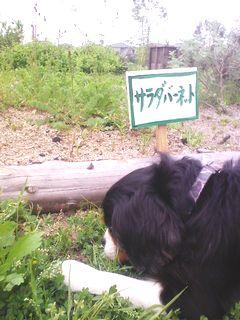 syoku.jpg