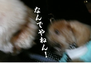 P11700162.jpg