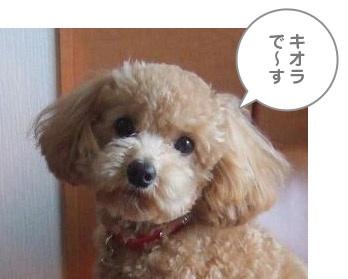 koira.jpg