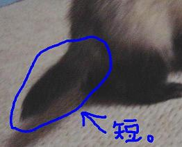 tsumu-shippo.jpg