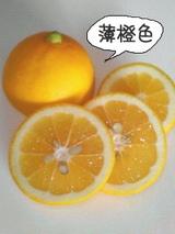 メイヤーレモン2