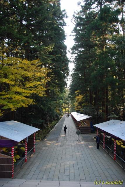 弥彦神社(2007/11/24)