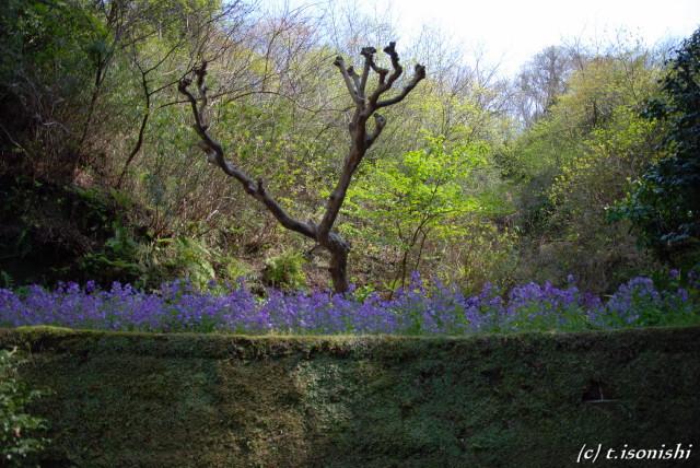 東慶寺2(2008/4/5)