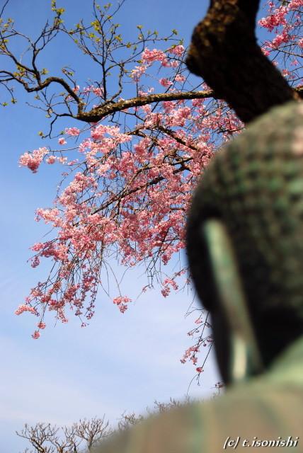 東慶寺(2008/4/5)