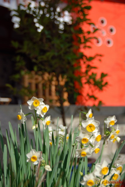 荏柄天神社(2008/1/5)