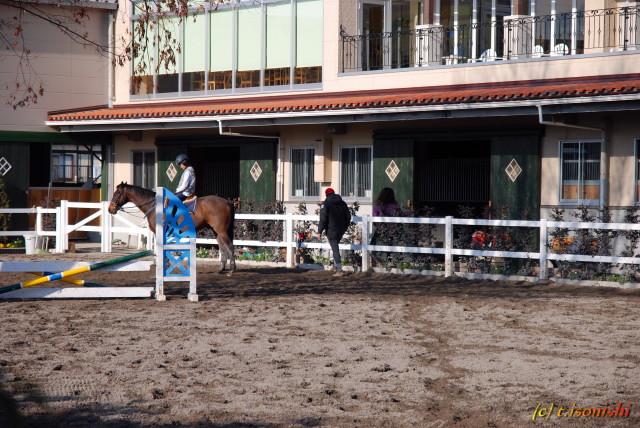 馬(2008/2/10)