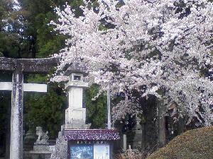 桜0418