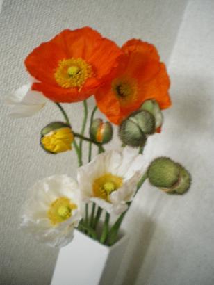 2008_0426画像0126