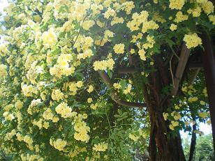 植物園の花1