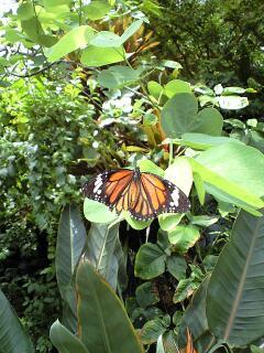 蝶のいる温室の中