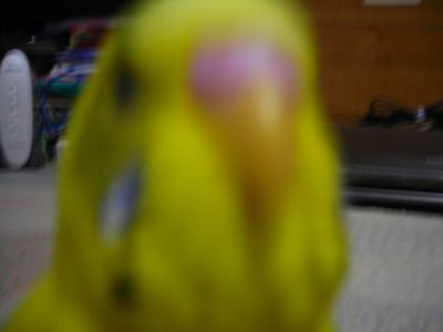 popo05_convert_20080627031349.jpg