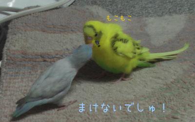 popomumu07.jpg