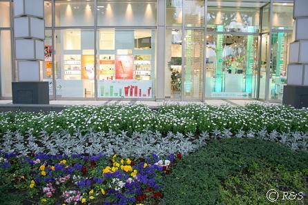 東京ミッドタウンの花IMG_8612-1