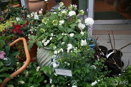 バラクラの花1IMG_8627