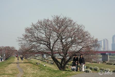 多摩川1IMG_9366