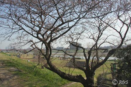 多摩川2IMG_9370