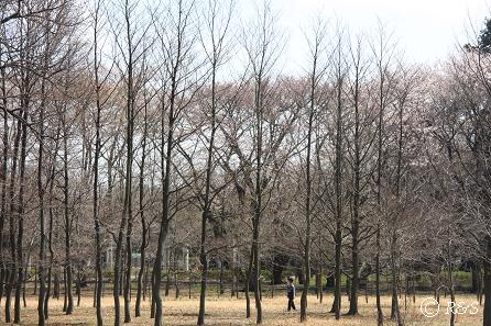 武蔵野公園-1IMG_9630