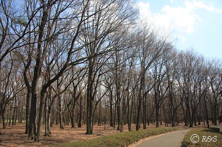 野川公園5IMG_9709