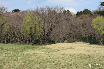 野川公園3IMG_9698