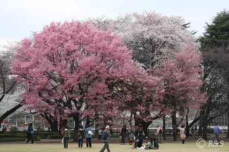 新宿御苑10IMG_0200
