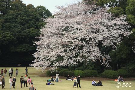 新宿御苑20IMG_0229