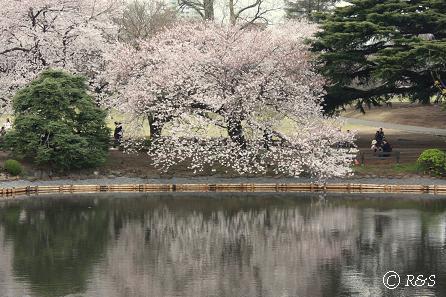 新宿御苑22IMG_0262
