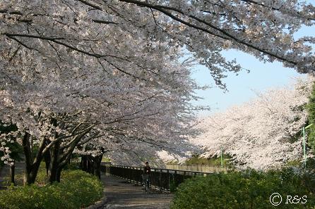 祖師谷公園IMG_9128-1