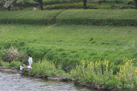野川の岸辺5IMG_2442