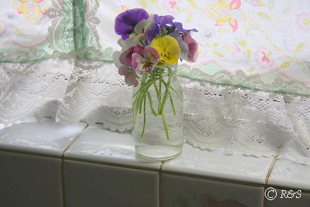 キッチンのビオラ1IMG_2620