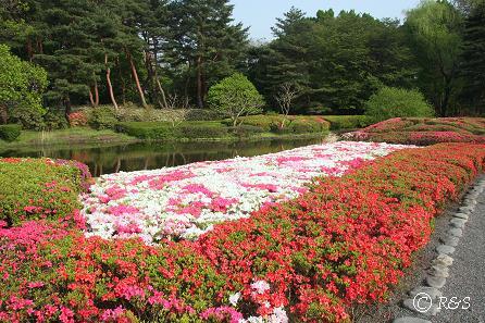 神代植物公園-サツキ1IMG_3300