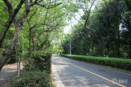 神代植物公園-公園付近1IMG_3191