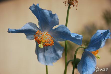 花屋の花3IMG_3779