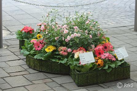 丸ノ内-花壇11IMG_4122