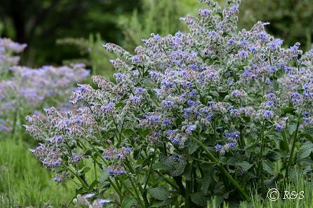 公園の花4IMG_6392