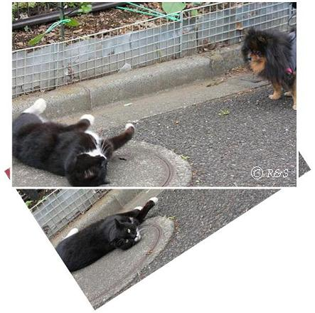 ベルと猫20080513-1