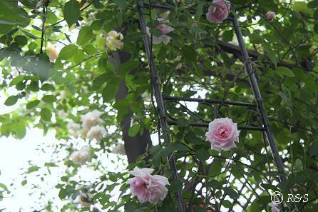 庭の様子4IMG_0155