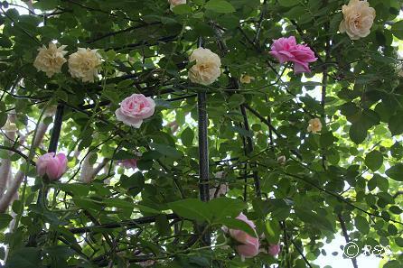庭の様子1IMG_6774