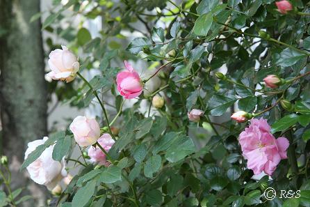 庭の様子2IMG_6803