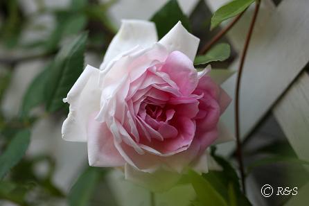 ブレイリーNo.2花壇IMG_0675