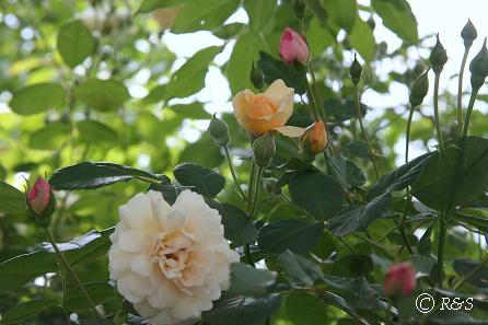 庭の様子2IMG_7134