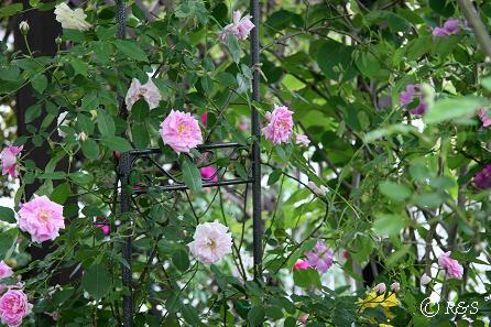 庭の様子5IMG_7290