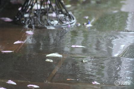 雨の様子20080520-3IMG_7873