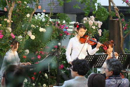 アークヒルズのバィオリン演奏20080523-2IMG_1210